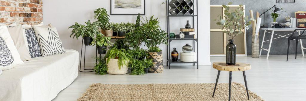 přesazování hrnkových rostlin