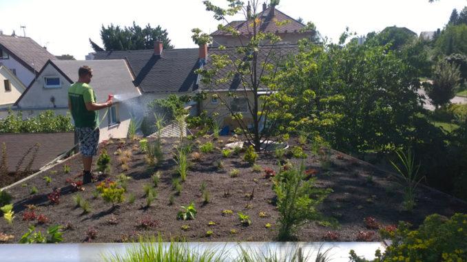 stresni zahrady navrh realizace